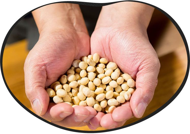 大豆の画像